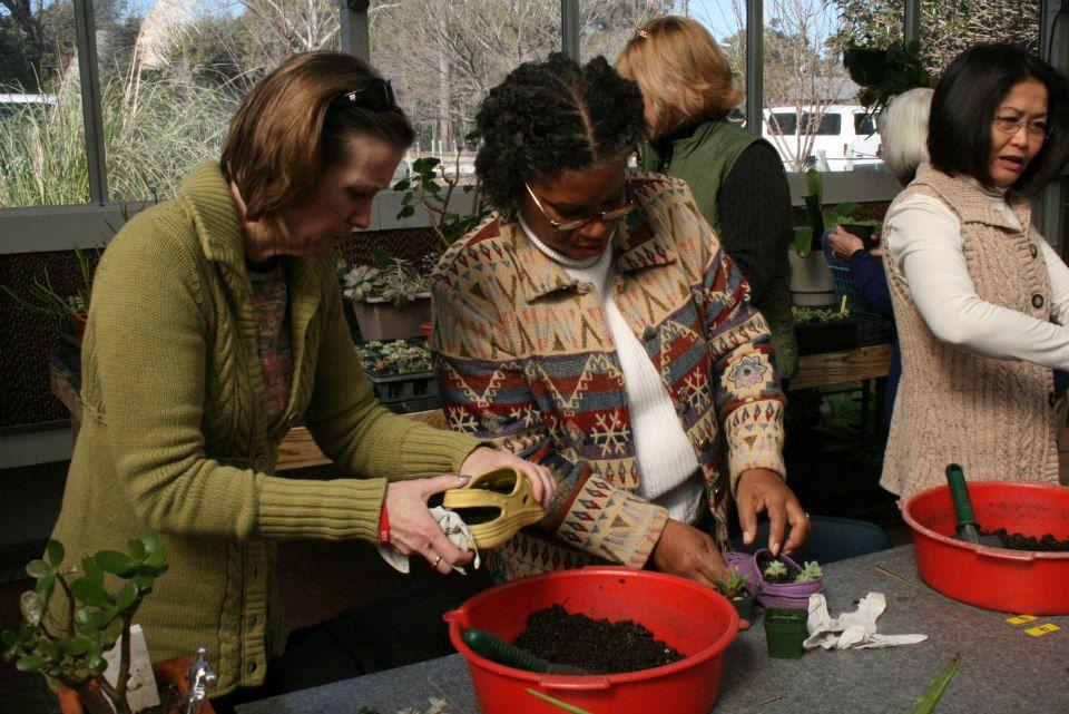 People planting seedlings