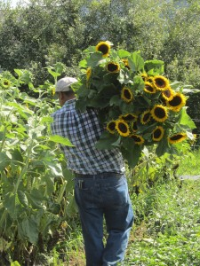 man carrying ornamental sunflowers
